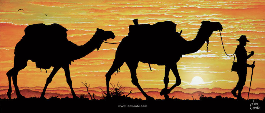 Australian Explorer with camels at sunset