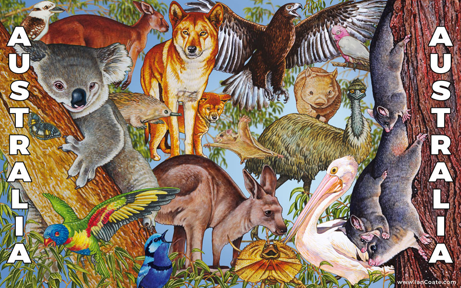 Australian Animal Artwork Combination by Ian Coate