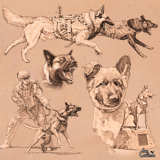 Military Working Dog Sketch